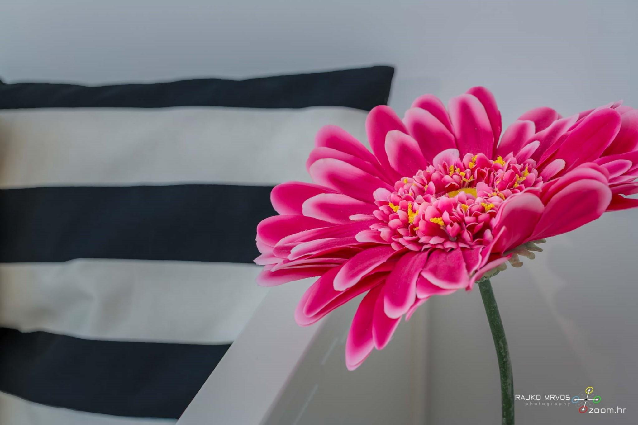 fotograf-interijera-fotograf-eksterijera-slikanje-apartmana-Central-Rijeka-Apartments-45