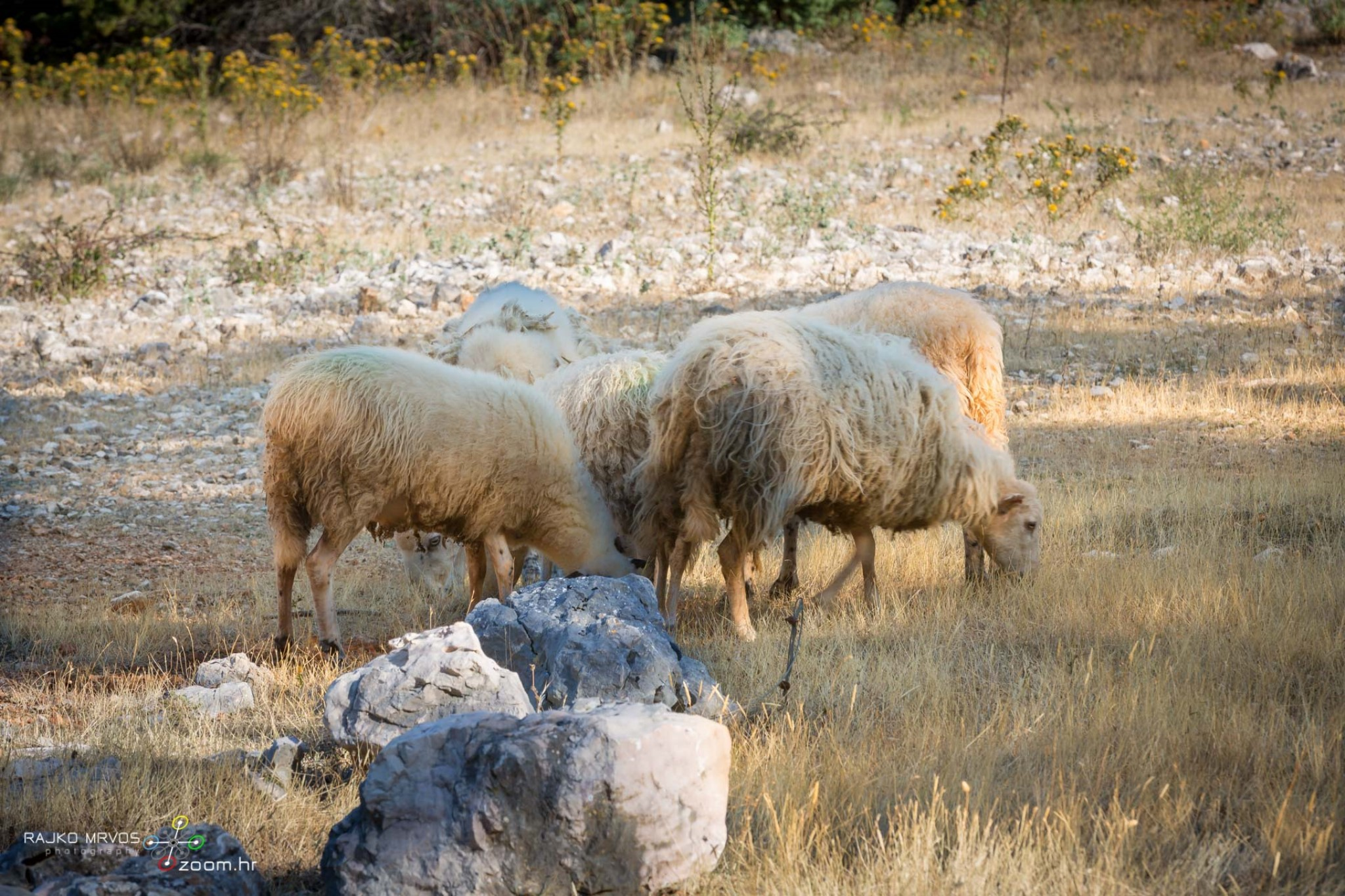 fotografiranje-interijera-fotograf-eksterijera-seoski-turizam-eco-art-farm-Filozici-4