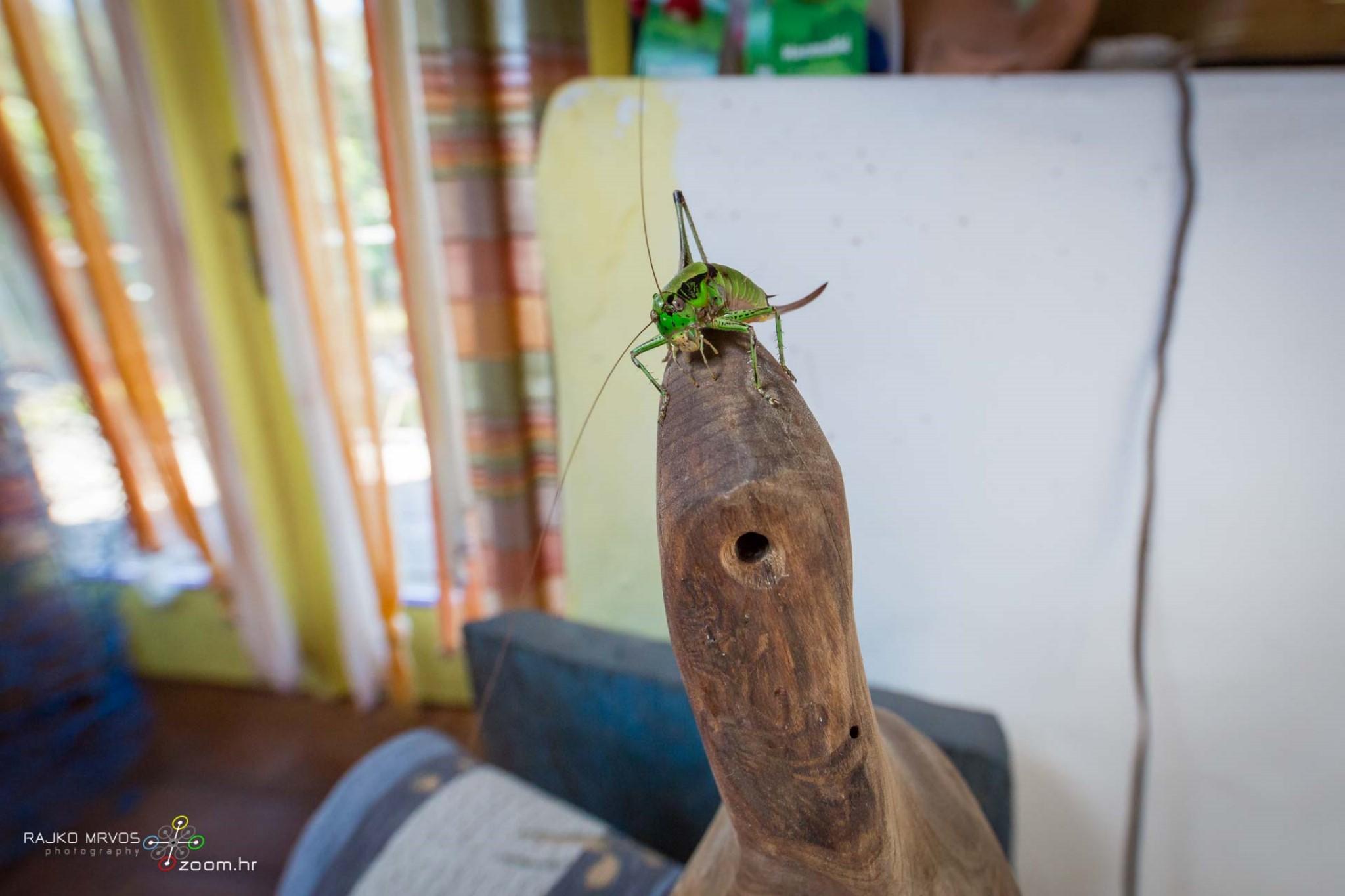 fotografiranje-interijera-fotograf-eksterijera-seoski-turizam-eco-art-farm-Filozici-25